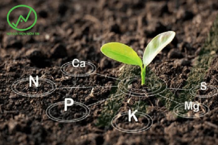 Canxi là một trong những chất dinh dưỡng trung lượng quan trọng đối với cây trồng