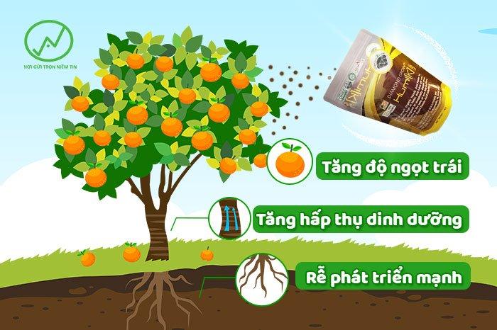 Làm sao để tăng độ ngọt tự nhiên cho trái cây?