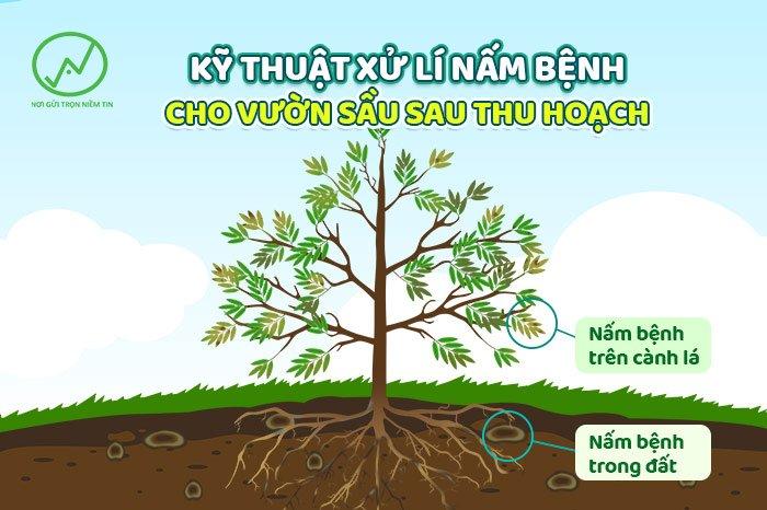 Kĩ thuật xủ lý nấm bệnh vườn sầu riêng sau thu hoạch