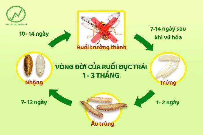 Cách diệt ruồi vàng hiệu quả là xua đuổi ruồi và làm hỏng khứu giác của chúng